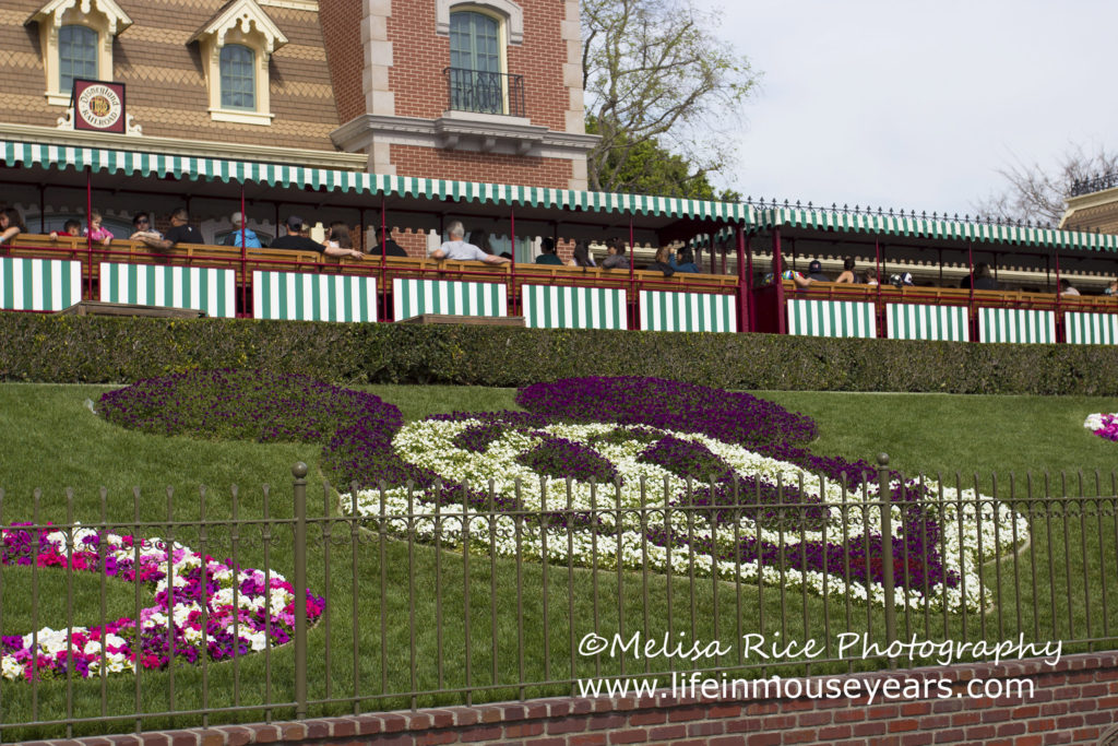 Floral Mickey from the entrance to Disneyland.