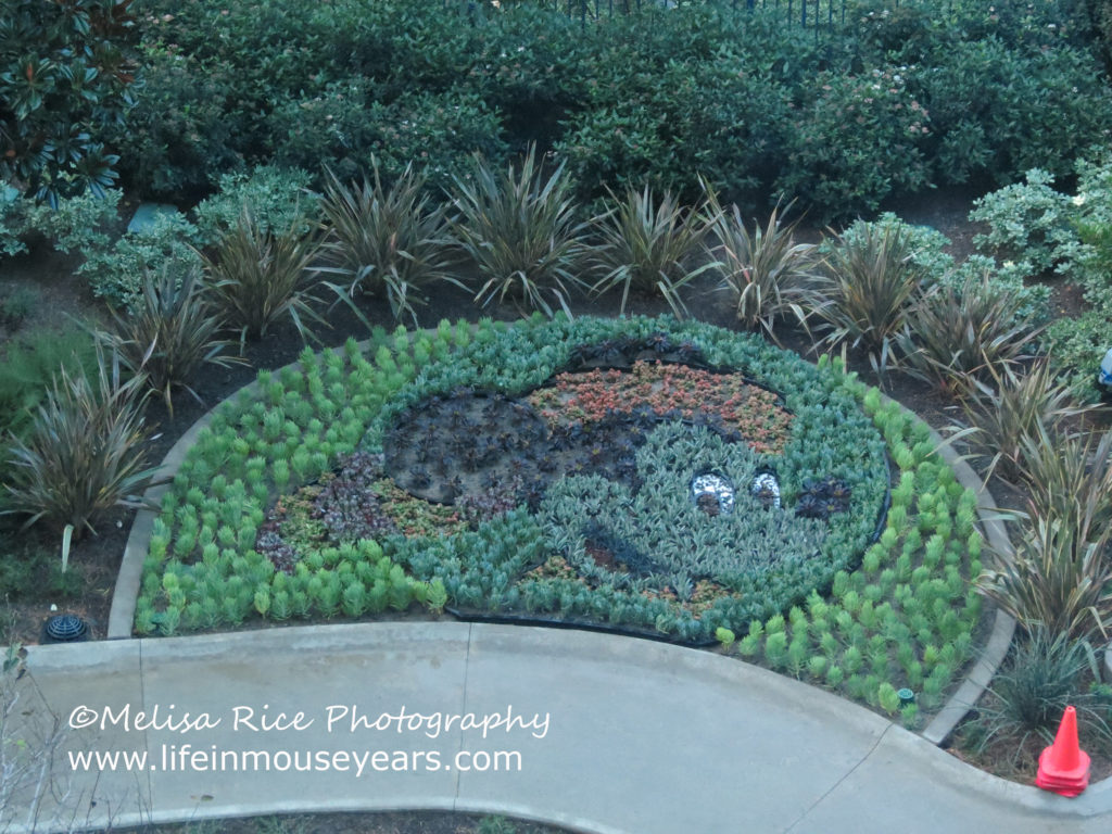 The finished product of the floral Frontier Mickey at the Disneyland Hotel.