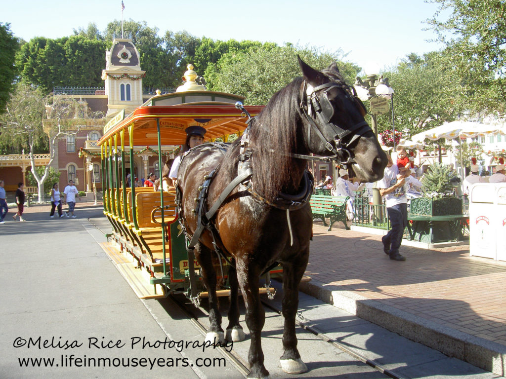 Horse drawn streetcar in Disneyland. opening day attraction.