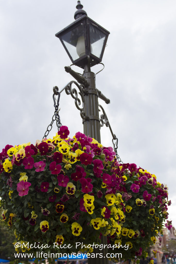 Flower basket on Main Street from late February.